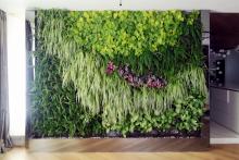 Вертикално озеленяване-27