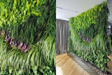 Вертикално озеленяване-28
