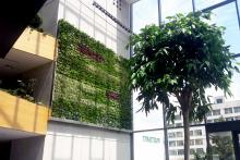 Вертикално озеленяване-29