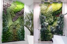 Вертикално озеленяване-3