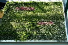 Вертикално озеленяване-30