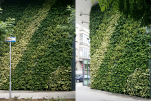 Вертикално озеленяване-33