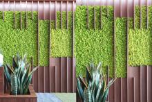 Вертикално озеленяване-35