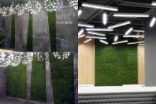 Вертикално озеленяване-37