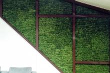 Вертикално озеленяване-38