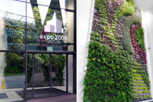 Вертикално озеленяване-4