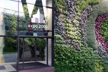 Вертикално озеленяване-5