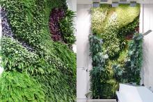Вертикално озеленяване-5a