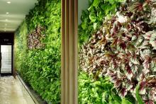 Вертикално озеленяване-6