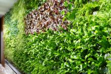 Вертикално озеленяване-7