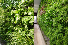 Вертикално озеленяване-8