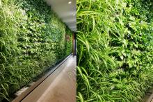 Вертикално озеленяване-9