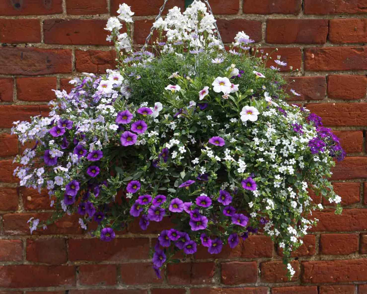 blueberry-hanging-basket-grown-by-green-pastures