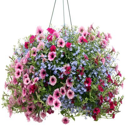 flower-baskets