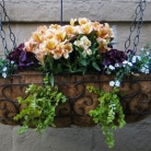 041209_hanging-baskets-final2